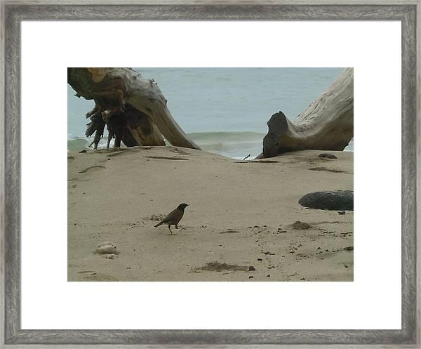 Gray Day On Maui Framed Print