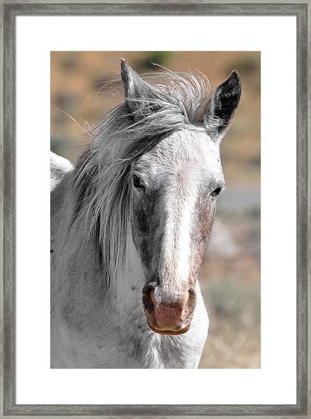 Gray Mare Framed Print