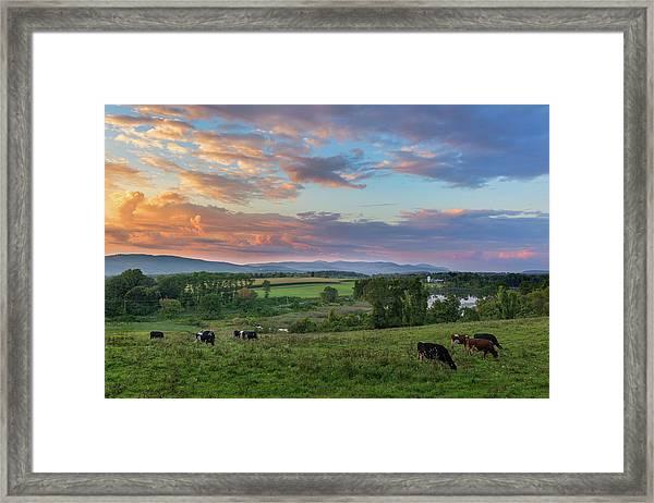 Grazing At Sunset Framed Print