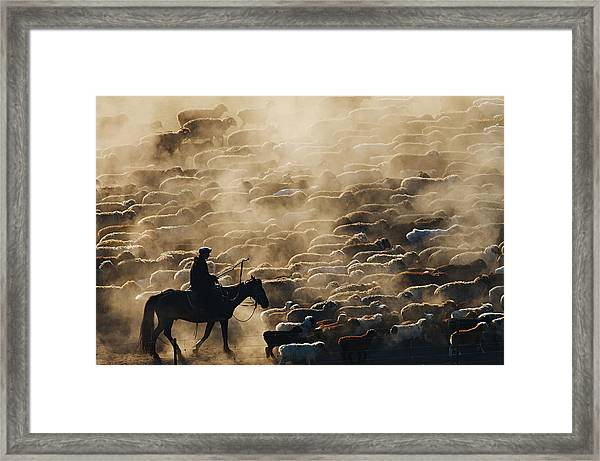 Grazing In The Morning Framed Print