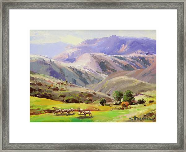 Grazing In The Salmon River Mountains Framed Print