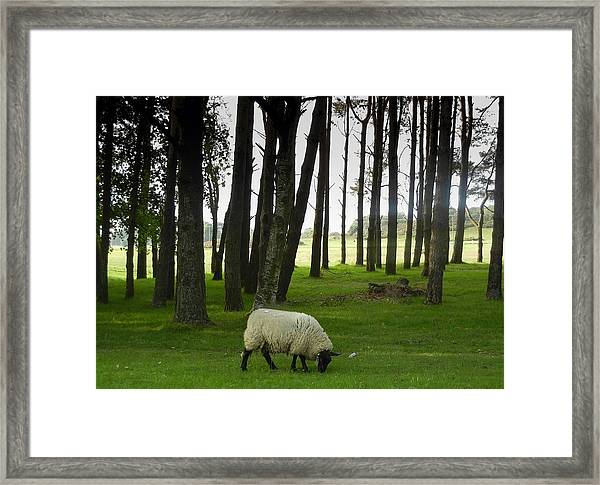 Grazing In The Woods Framed Print