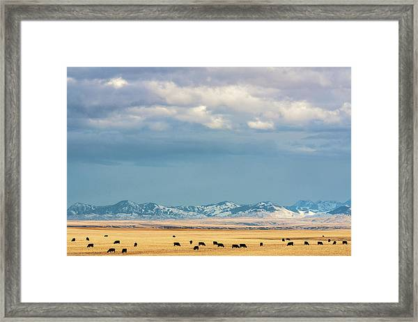 Grazing Near Highwood Framed Print