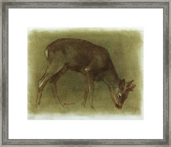 Grazing Roe Deer Oil Painting Framed Print