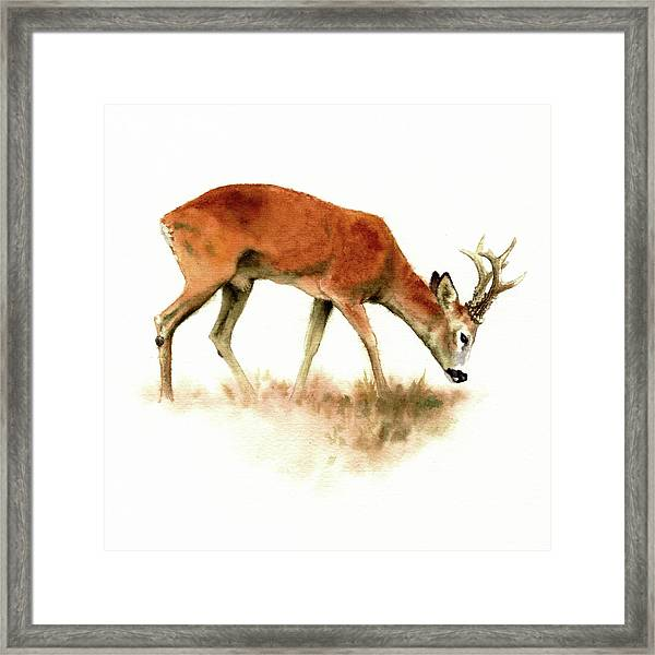 Grazing Roebuck Watercolor Framed Print