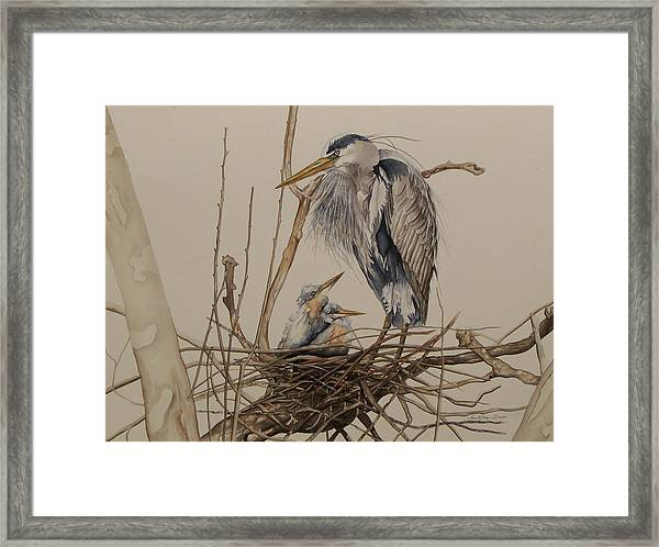 Great Blue Heron And Chicks Framed Print