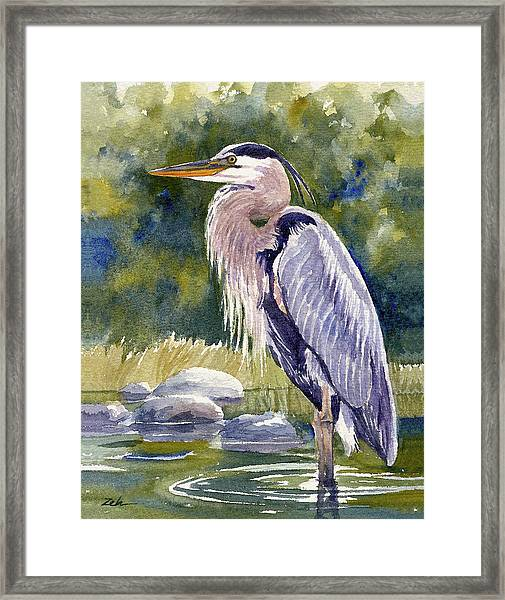 Great Blue Heron In A Stream Framed Print