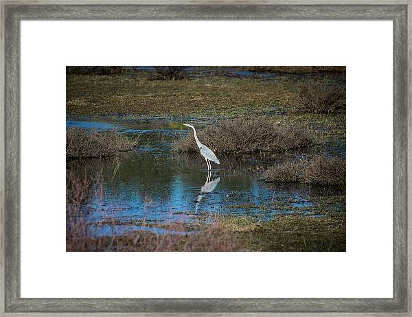 Framed Print featuring the photograph Great Blue Heron by Jason Coward