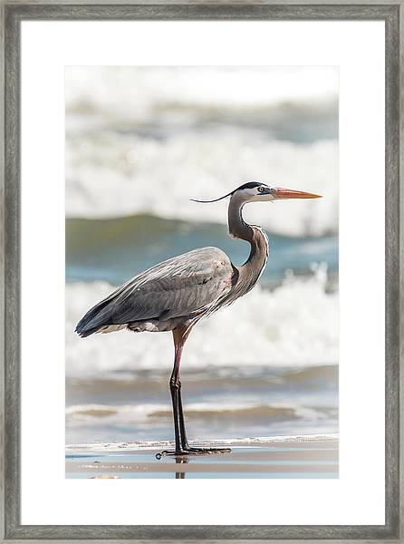 Framed Print featuring the photograph Great Blue Heron Profile by Patti Deters
