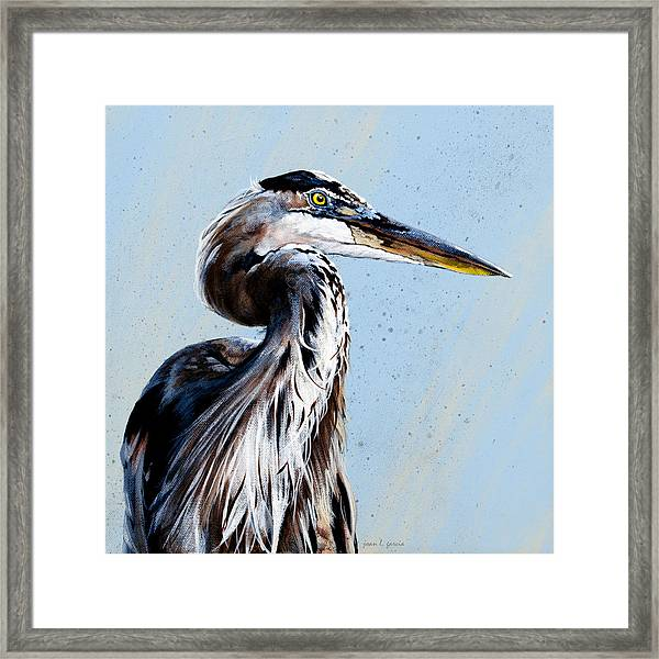Great Blue Theodore Framed Print