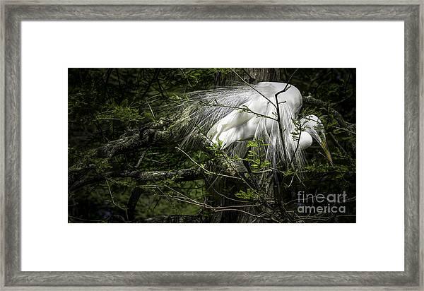 Great Egret #2 Framed Print
