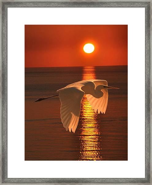 Framed Print featuring the mixed media Great Egret At Sunset by Eric Kempson