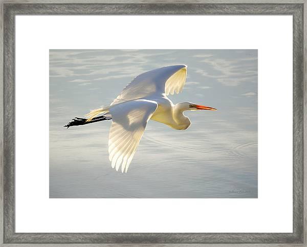 Great Egret Glow Framed Print