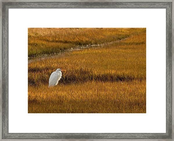Great Egret In Morning Light Framed Print