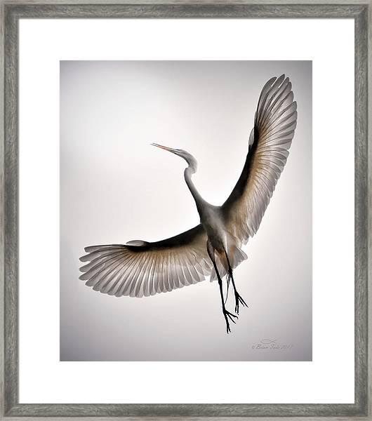Great Egret Majesty Framed Print