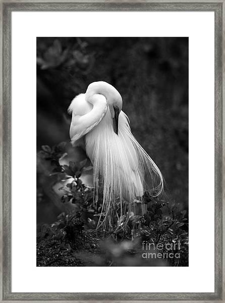 Zen Tree  Framed Print