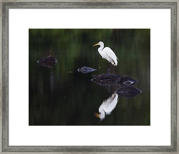 Great Egret Reflection Framed Print