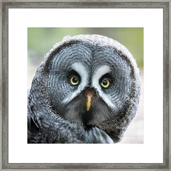Great Grey Owl Closeup Framed Print