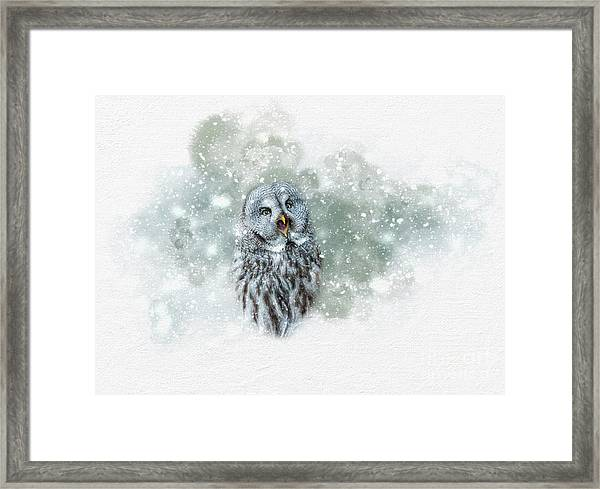 Great Grey Owl In Snowstorm Framed Print