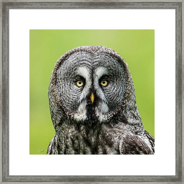 Great Grey's Portrait Closeup Square Framed Print