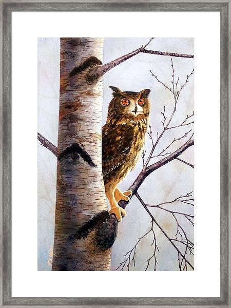 Great Horned Owl In Birch Framed Print