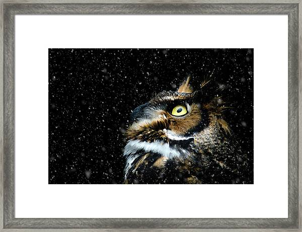 Great Horned Owl In The Snow Framed Print