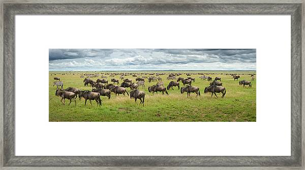 Great Migration In Serengeti Plains Framed Print