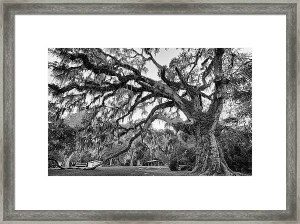 Great Tree Framed Print