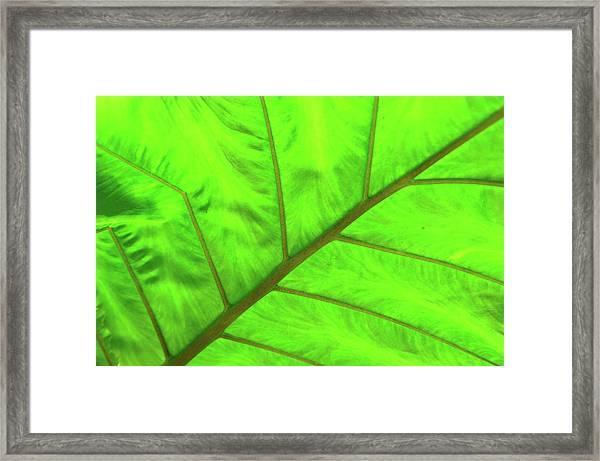 Green Abstract No. 5 Framed Print