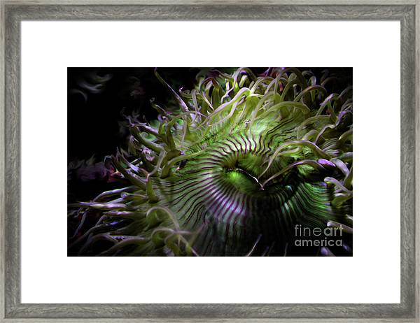 Green Anemone Framed Print