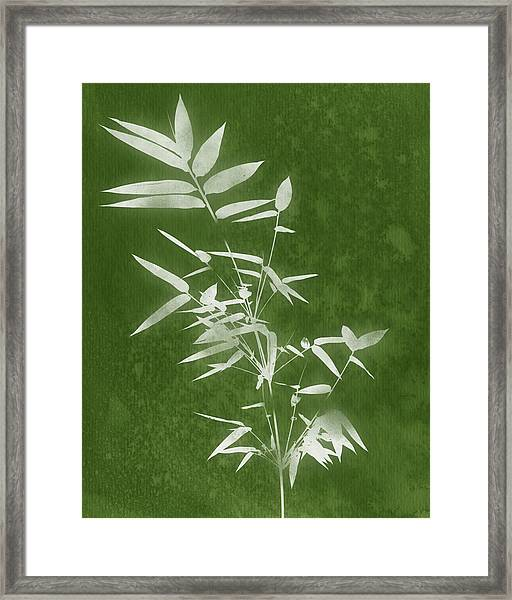 Green Bamboo 3- Art By Linda Woods Framed Print