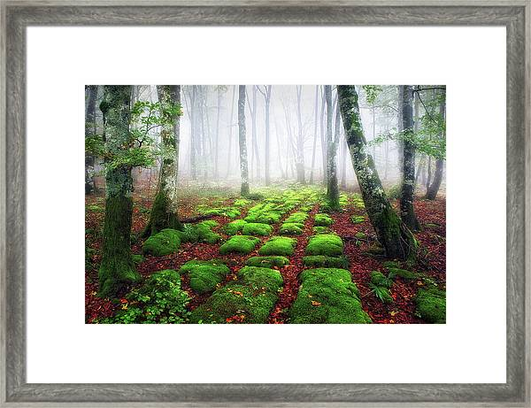 Green Brick Road Framed Print