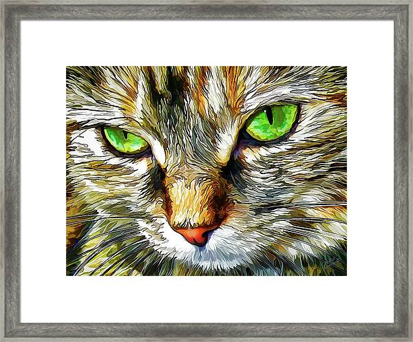 Zen Cat Framed Print
