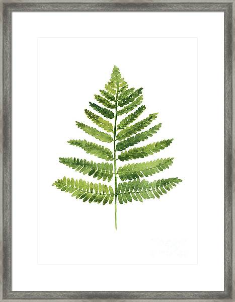 Green Ferns Watercolor Poster Framed Print