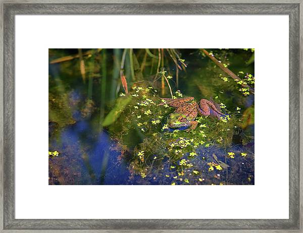Green Frog In The Pond Framed Print