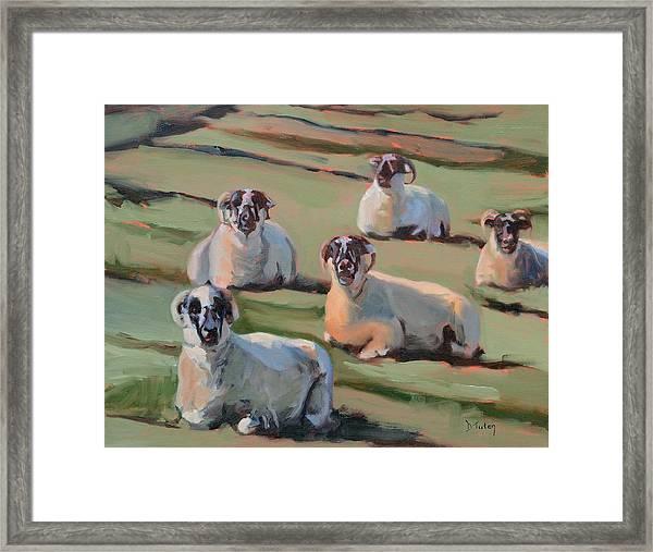 Green Hill Sheep At Rest Framed Print