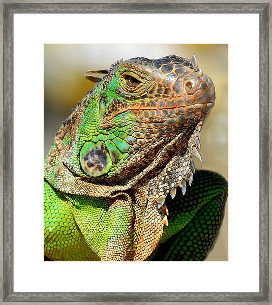 Green Iguana Series Framed Print