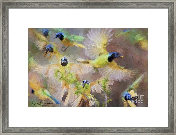 Green Jay Collage Framed Print