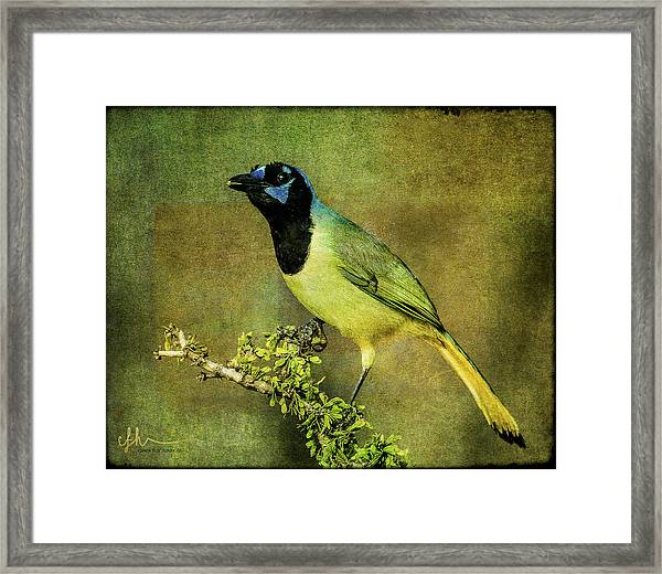 Green Jay With Textures Framed Print