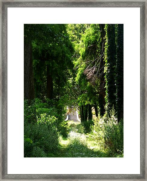 Green Lombardy Framed Print