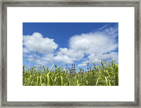 Green Meadow On Kauai Island, Hawaii Framed Print by Julia Hiebaum