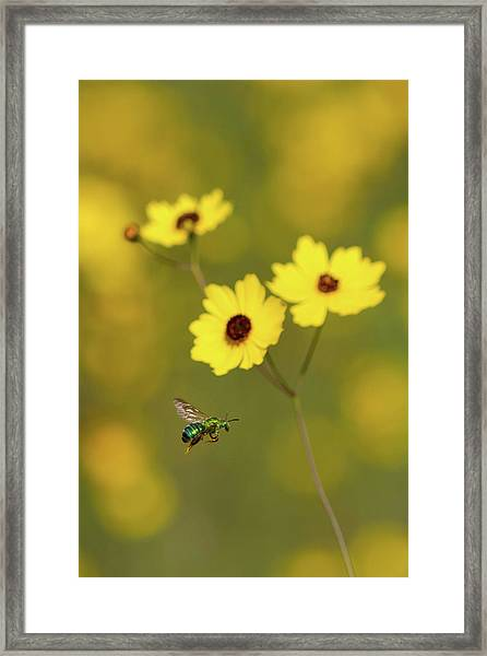 Green Metallic Bee Framed Print
