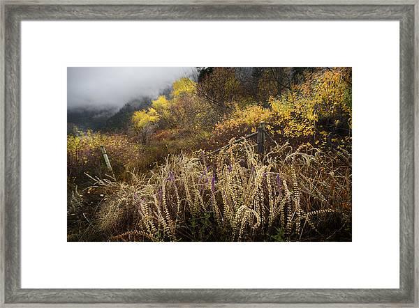 Green Mountain Dawn Framed Print