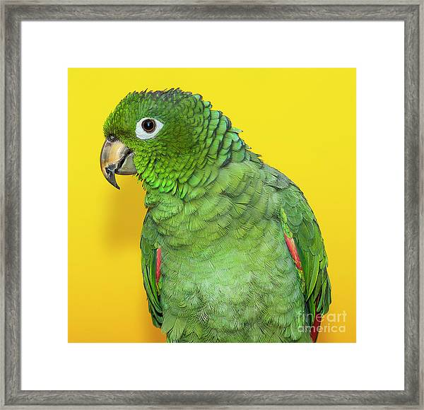 Green Parrot Framed Print