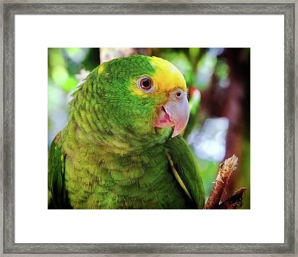 Green Parrot Framed Print