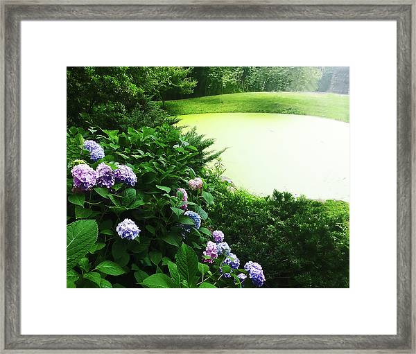 Green Pond Framed Print