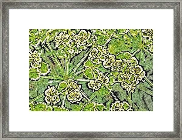 Green Spurge 1 Framed Print