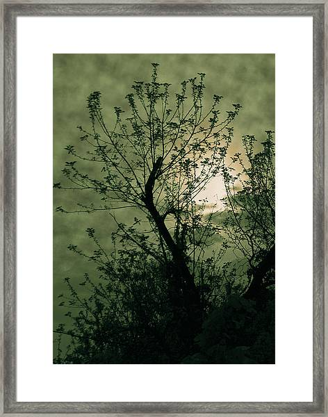 Green Sunset Framed Print