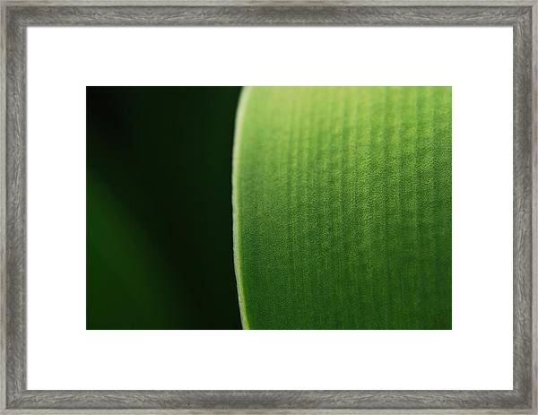 Green Framed Print by Susette Lacsina