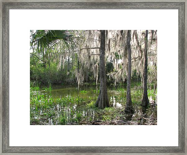 Green Swamp Framed Print